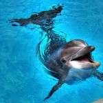 Dolphins always smile!  Wouldn't you if you swam that beautifully?